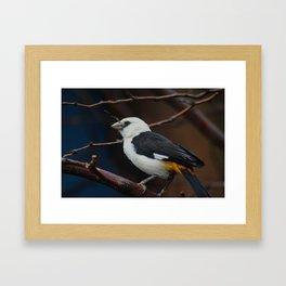 chirp Framed Art Print