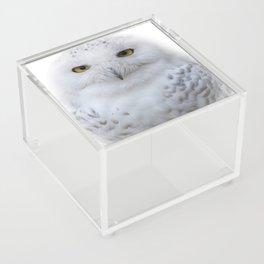 Dreamy Encounter with a Serene Snowy Owl Acrylic Box