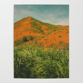 California Poppies 026 Poster