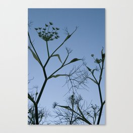 stem silhouette 2 Canvas Print