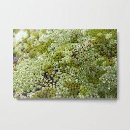 wonderful moss Metal Print