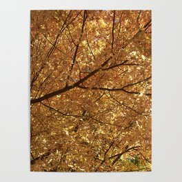 The colour tree Poster