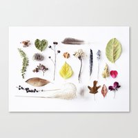 botanical Canvas Prints featuring botanical by Miles of Light