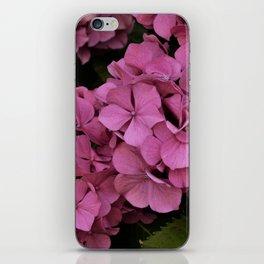Pink hydrangea flowers iPhone Skin