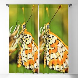 Spotted Fritillary Orange and White Butterfly Blackout Curtain
