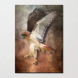 Red Tail Hawk in Vintage Light Canvas Print