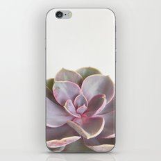 Purple Succulent iPhone & iPod Skin