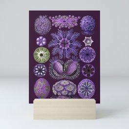 Ernst Haeckel Ascidiae Sea Squirts in Purple Mini Art Print