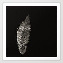 Project 'Decay'. Sweet Chestnut leaf (Castanea sativa) Art Print