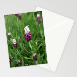 Wild lavender 1015 Stationery Cards