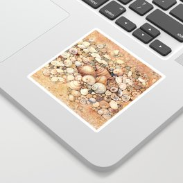 Shells on Sand Sticker