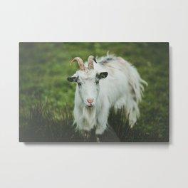 Funny Goat Metal Print