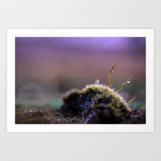 Moss Macro at Sunset Art Print