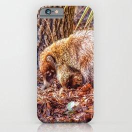 Coatimundi, Willcox Arizona iPhone Case