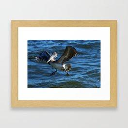 Pelican Landing Framed Art Print