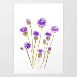 purple thorny wildflower Art Print