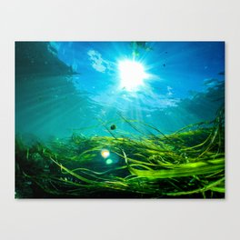 Wild Rice Flow Canvas Print