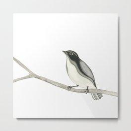 Gray Bird Metal Print