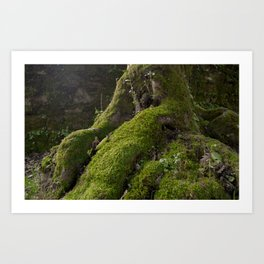 Ancient tree root with moss Art Print