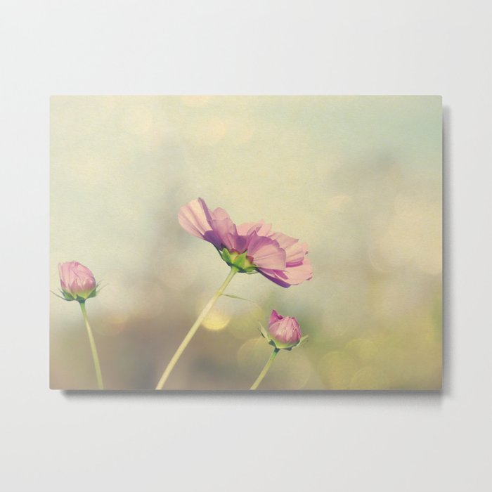 Cosmos in the Pink II Metal Print