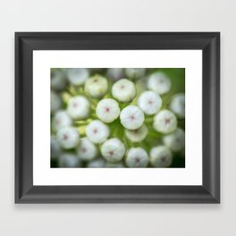 Wht-flowered Milkweed Framed Art Print