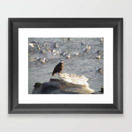 Eagle on Ice Framed Art Print