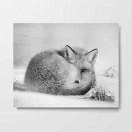 Peek-a-boo Fox Metal Print