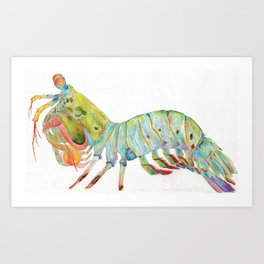 Peacock Mantis Shrimp Art Print