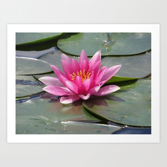 df0c87d410aa38 Pretty Pink Water Lily Photo Art Print by moonfluff | Society6
