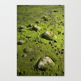 A Dry Pond Reveals Much Beneath Canvas Print
