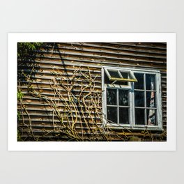 Old Curtains Art Print