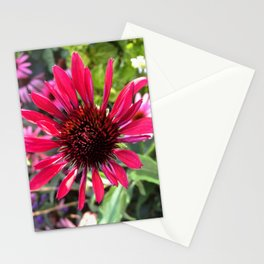 Hot Pink Beauty Stationery Cards