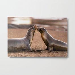 Sea lions kiss - wildlife animals kissing on beach Metal Print