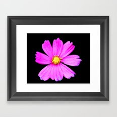 Cosmos Flower Photography Close up Macro Framed Art Print
