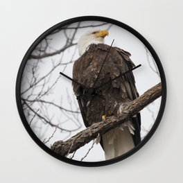 Majestic Bald Eagle Wall Clock