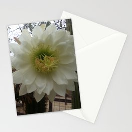 White Cactus Flower Stationery Cards