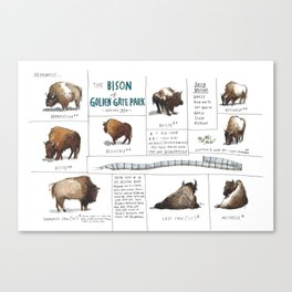 The Bison of Golden Gate Park from Meanwhile in San Francisco Canvas Print