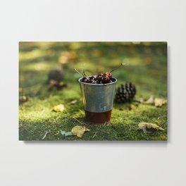 Early Spring Cherries  Metal Print