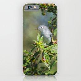 Blue-gray Gnatcatcher iPhone Case