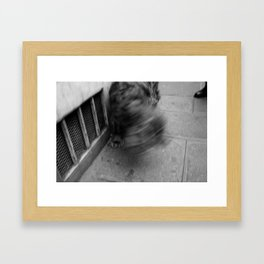 Dog and black shoe Framed Art Print