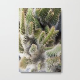 Hairy Cactus 1 Metal Print