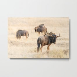 Group of wildebeest Metal Print