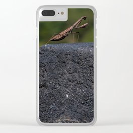 Praying Mantis of the Great Wall Clear iPhone Case