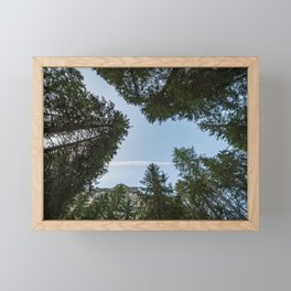Looking upwards you can see a blue sky among the tall trees Framed Mini Art Print