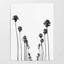 Palm Trees 8 Poster
