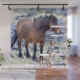 Watercolor Horse 65, Icelandic Pony, Hofn, Iceland, Stocky Resistance Wall Mural