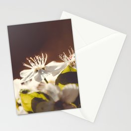 Pear Blossoms 2 Stationery Cards