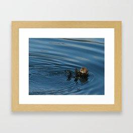 Alaskan Sea Otter waving Framed Art Print