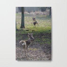 Roe Deer on Jeju Island Metal Print