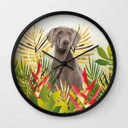 Weimaraner Dog in garden Wall Clock